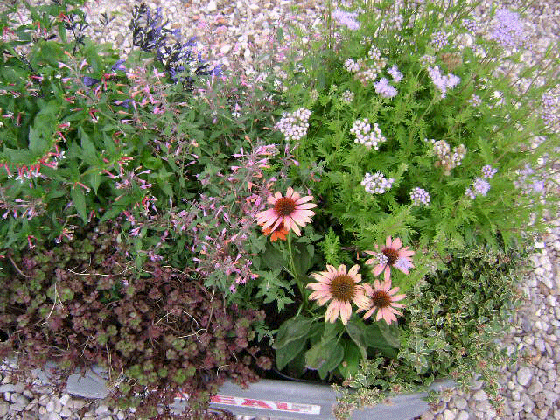 Green 39 n growing garden center gallery pages for Low maintenance border plants